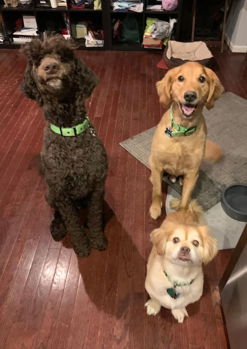 three dogs posing for the camera
