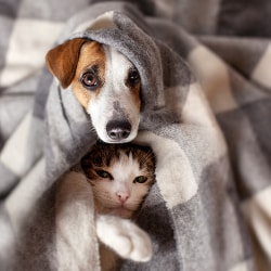 dog and cat snuggled together